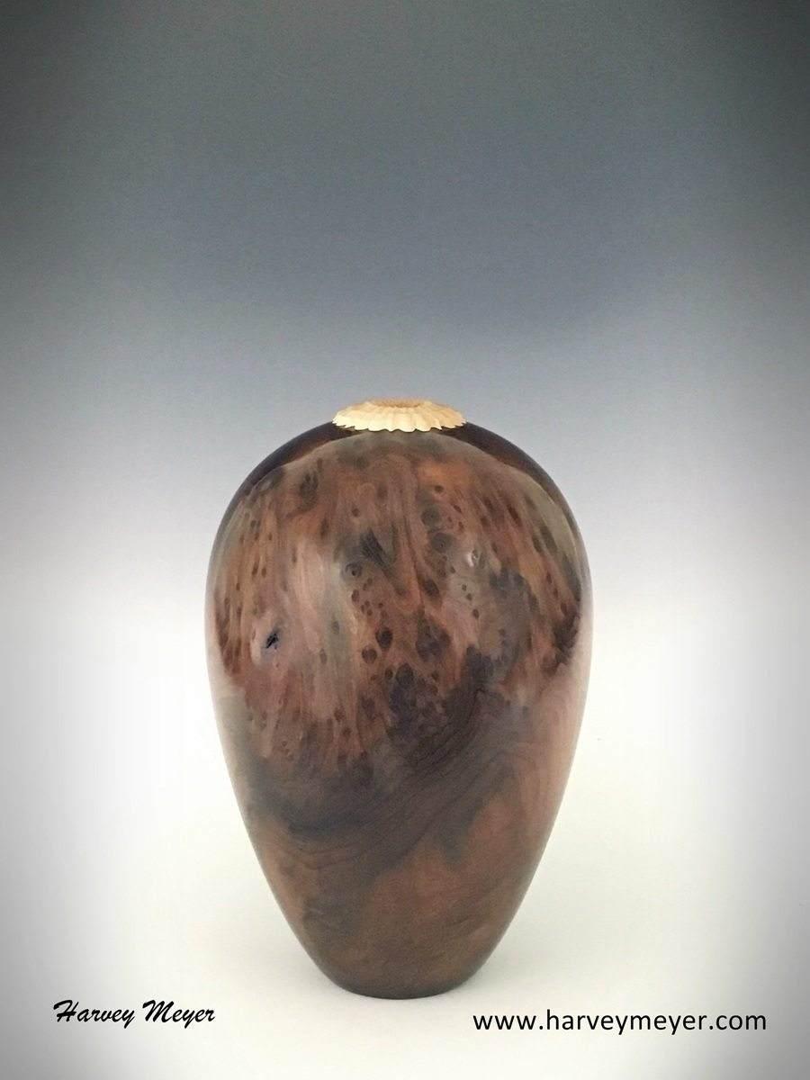 RedwoodVessel1LowRes